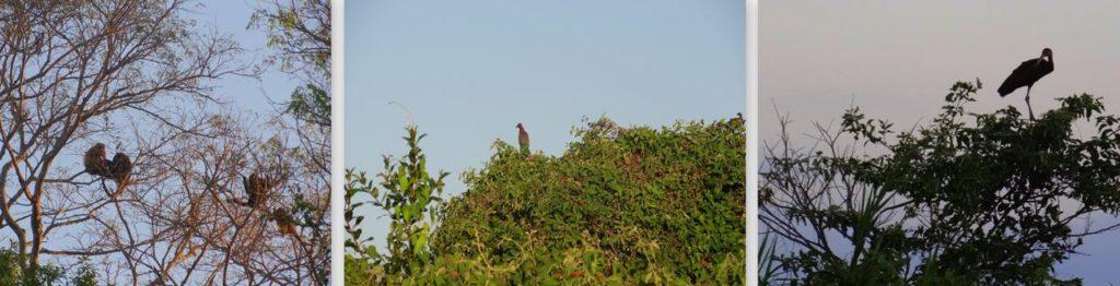 o que fazer no pantanal macacos animais arvores