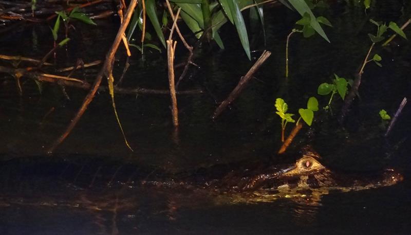 o-que-fazer-no-pantanal-observacao-noturna